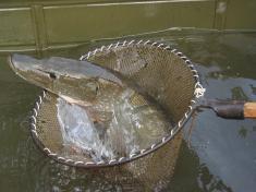 Rybářský spolek